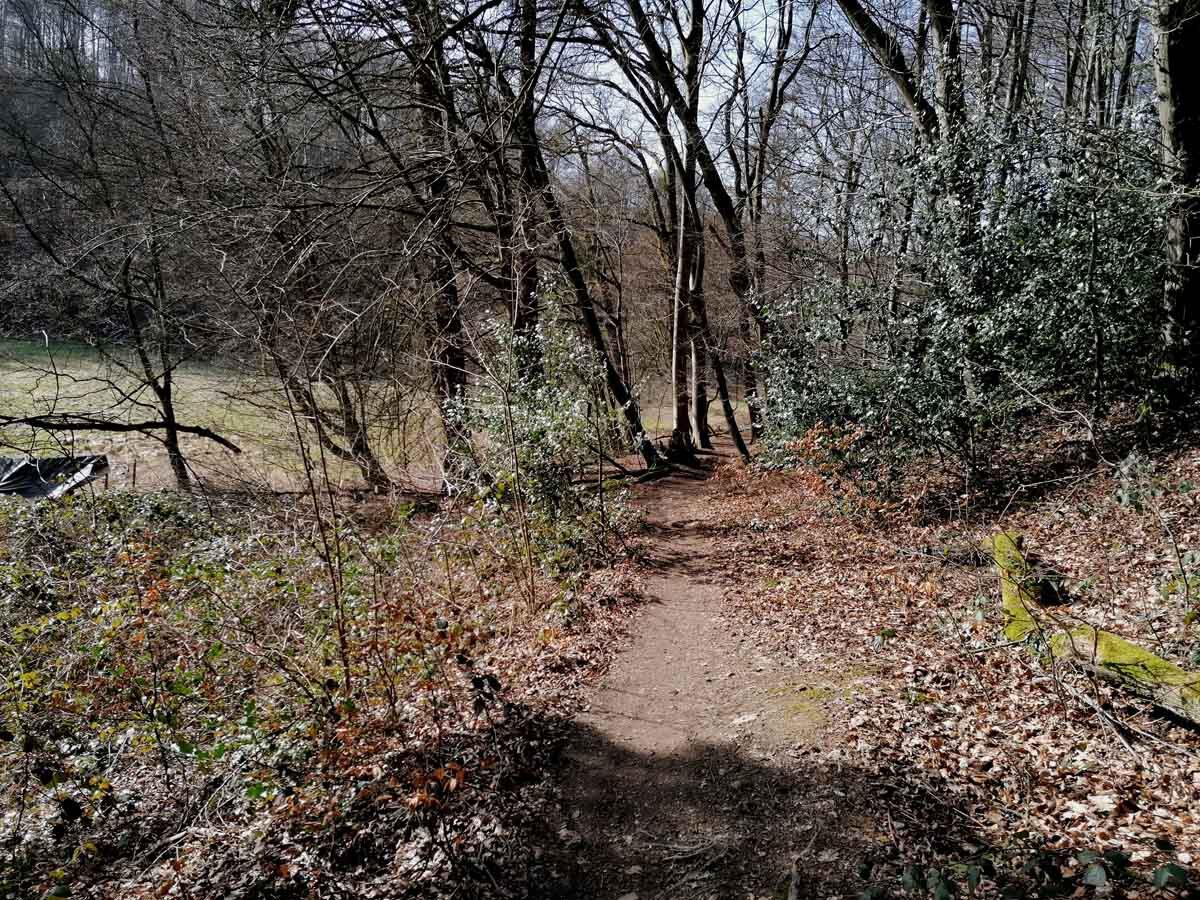 Rundweg Wenigerbach und Naafbachtal 6