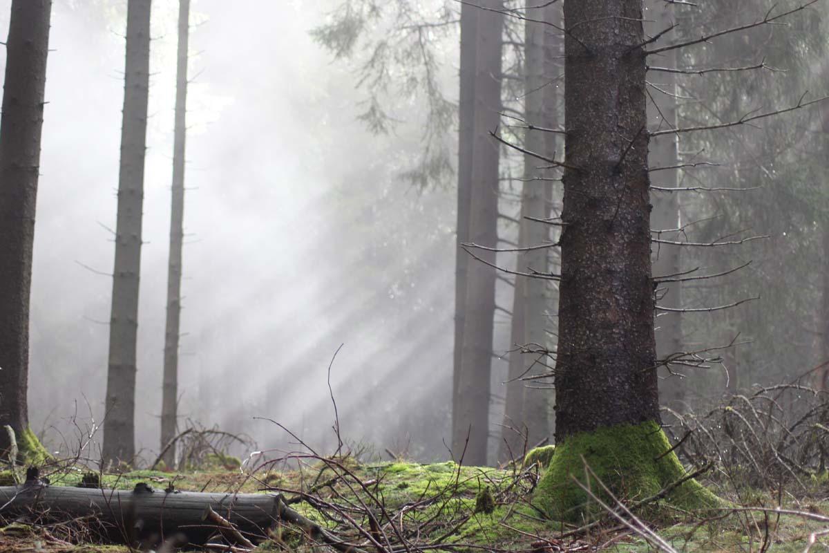 Reisetipps Ostern Wald