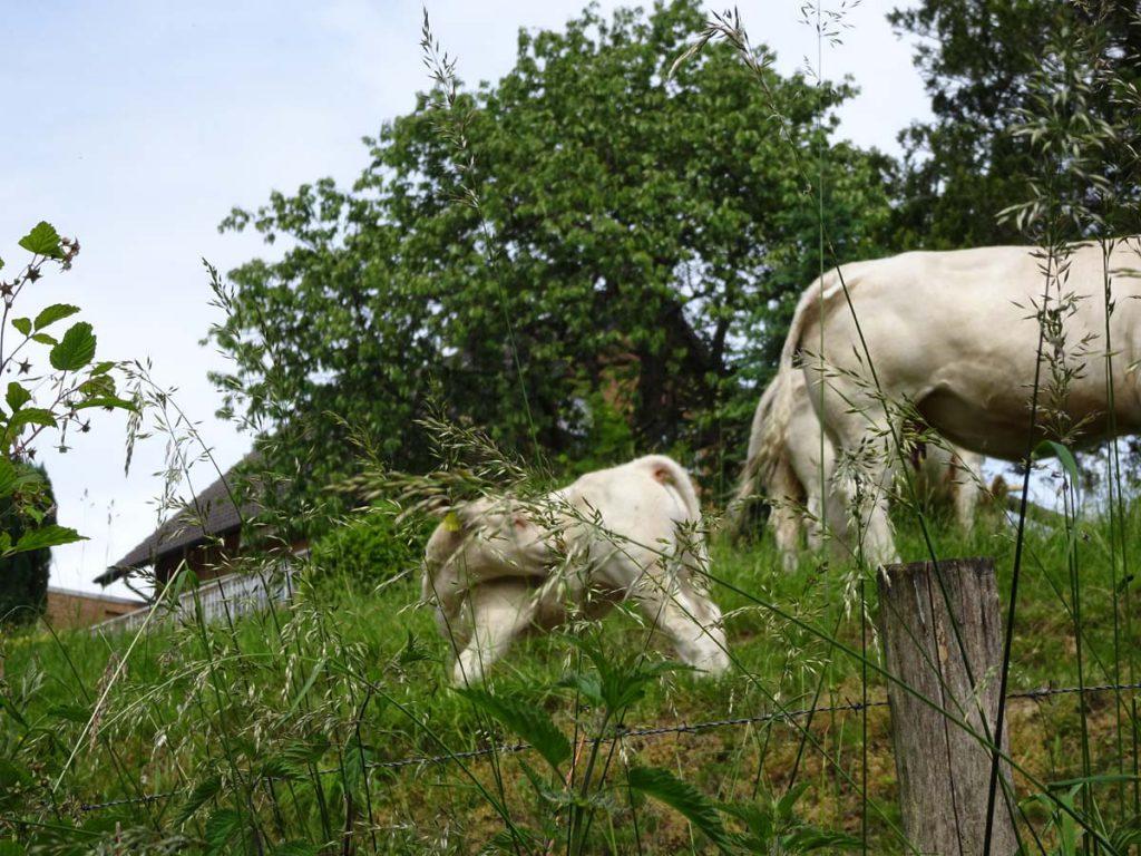 Wanderung bei Marialinden: Rundweg Naafbachtal 5