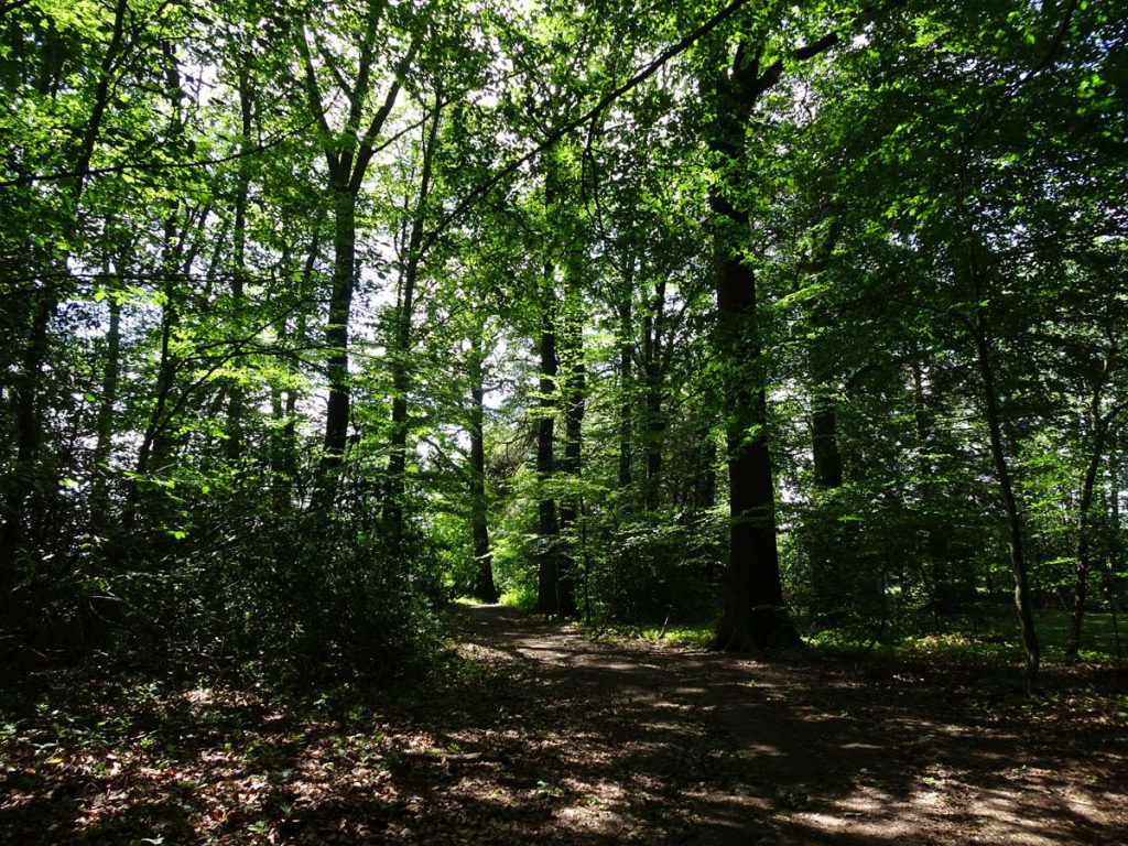 Wanderung bei Marialinden: Rundweg Naafbachtal 1