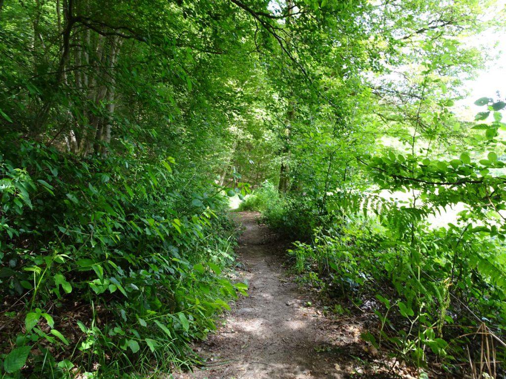 Wanderung bei Marialinden: Rundweg Naafbachtal 4