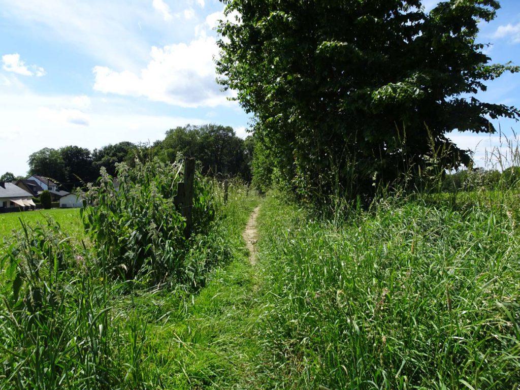 Rundwanderweg Naafbachtal Zuweg