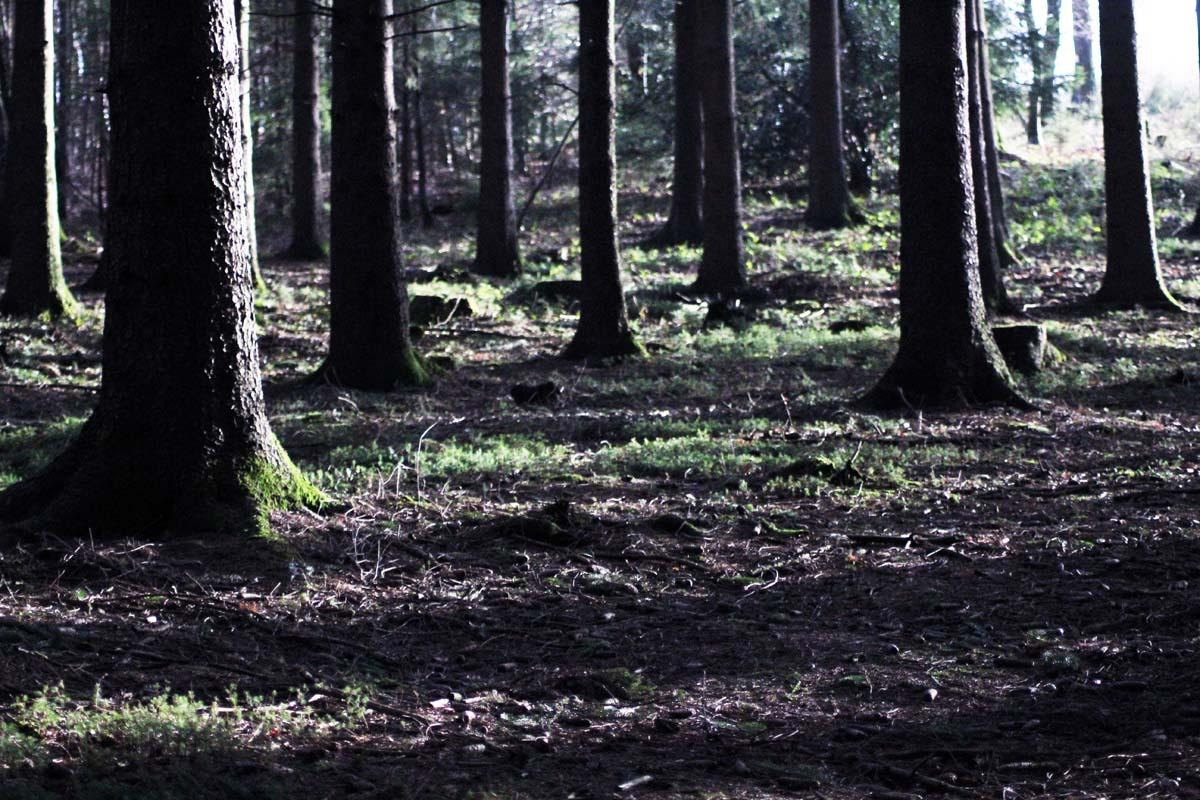Schöne Kurzwanderungen Wald