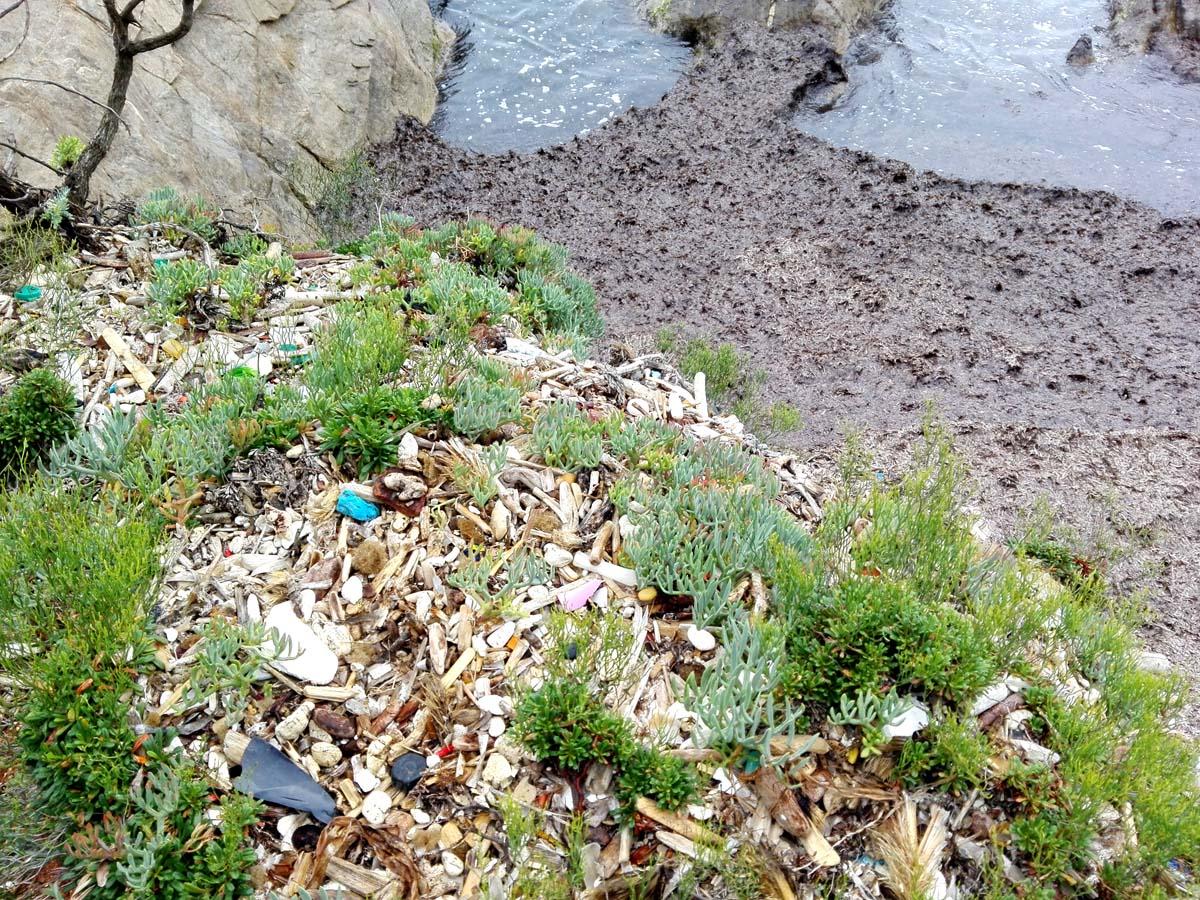 Sentier Littoral Plastikmüll