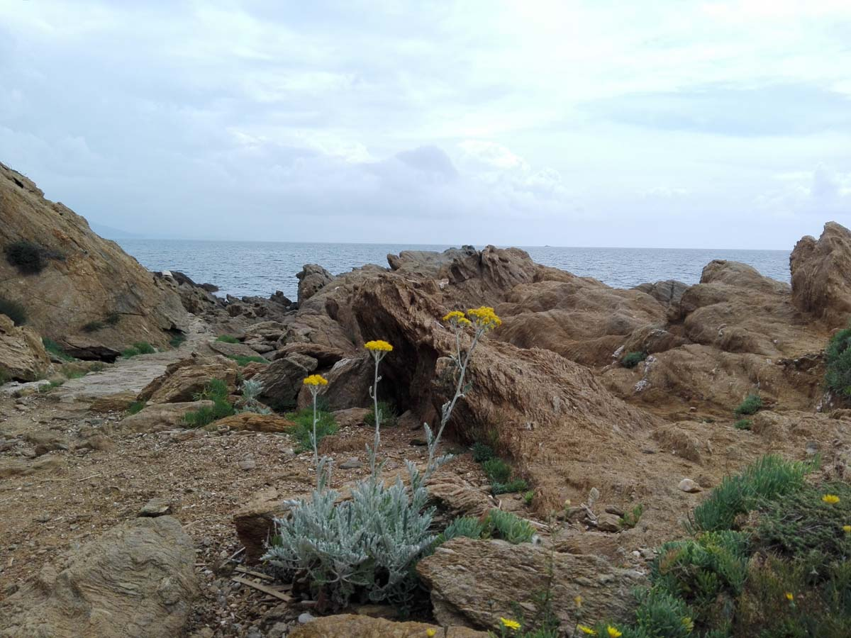 Sentier Littoral Vegetation 2