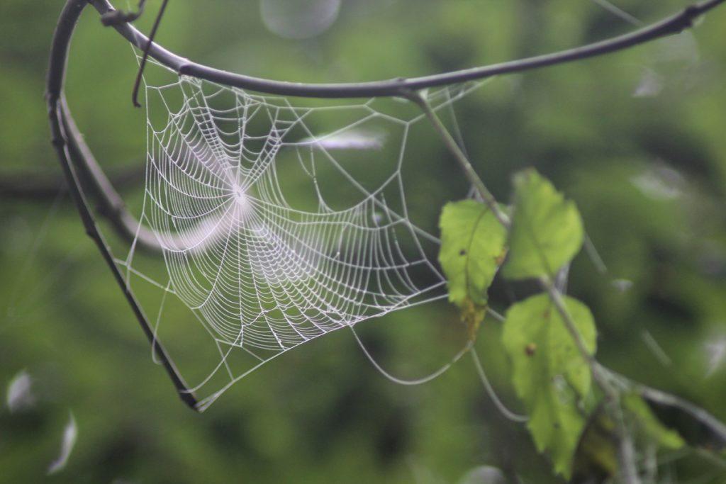 spinnennetz-im-baum