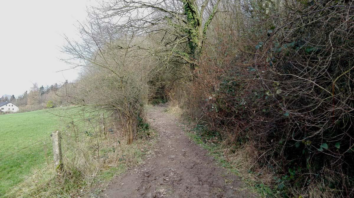 Steinhauerpfad Weg