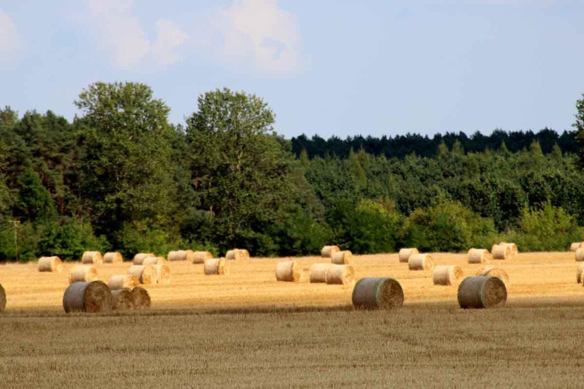 Radreise Mecklenburgische Seenplatte Felder