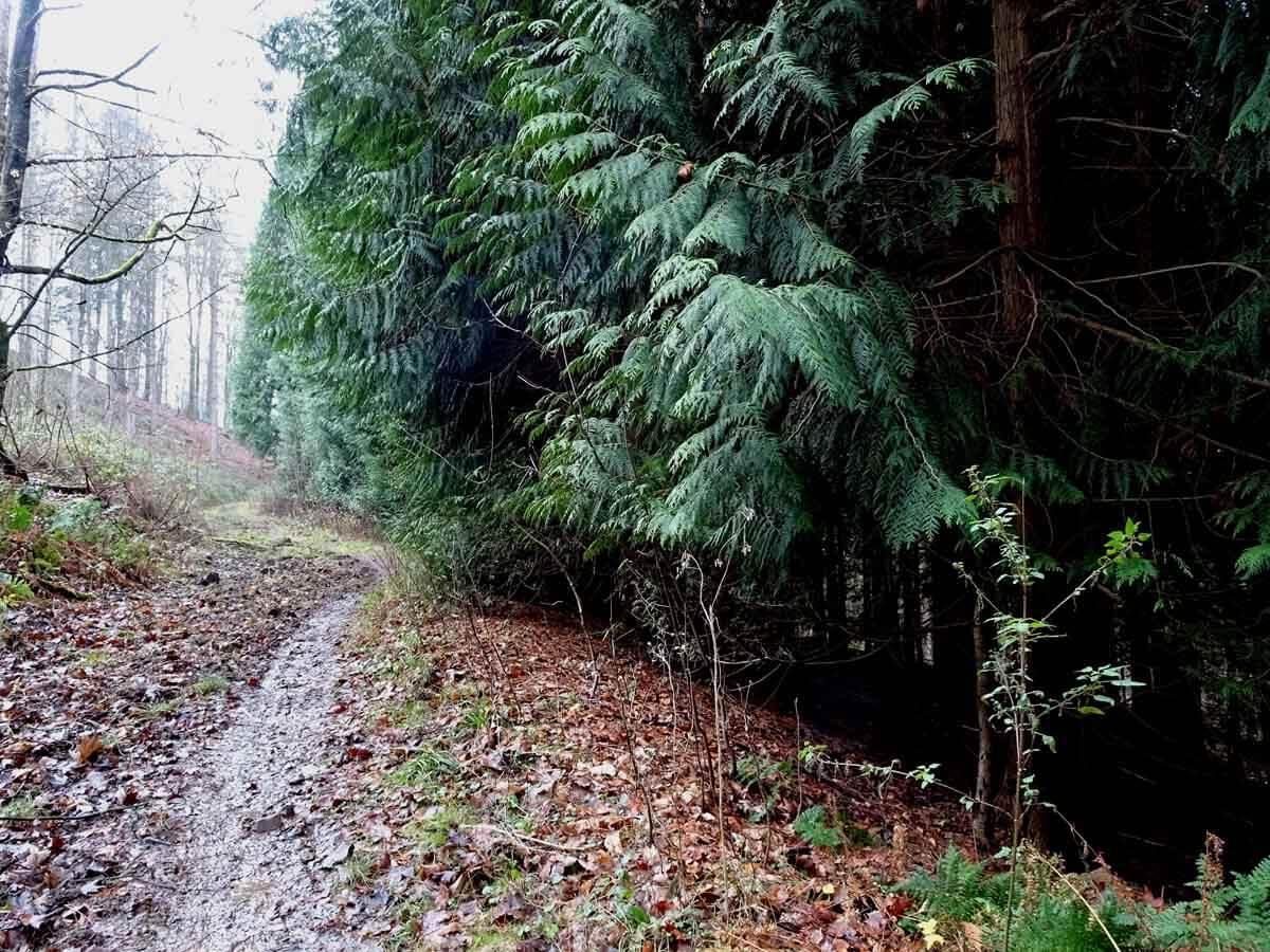 Wanderung auf kleinen Pfaden durch das Burgholz 5