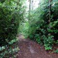 Der Waldmythenweg 6