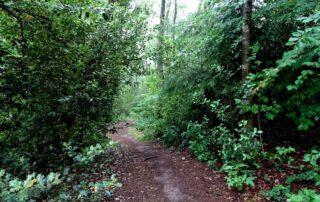 Der Waldmythenweg 1