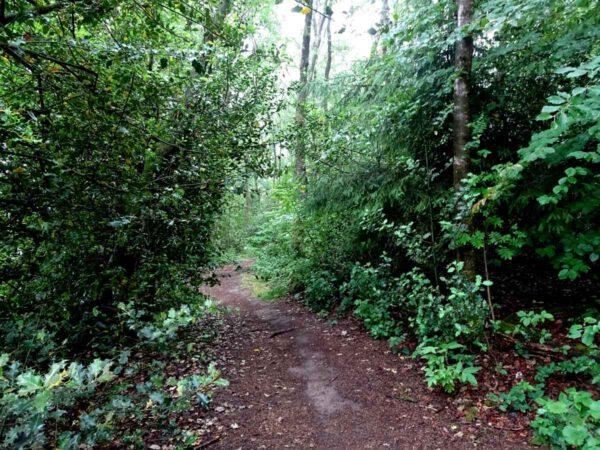 Der Waldmythenweg 5