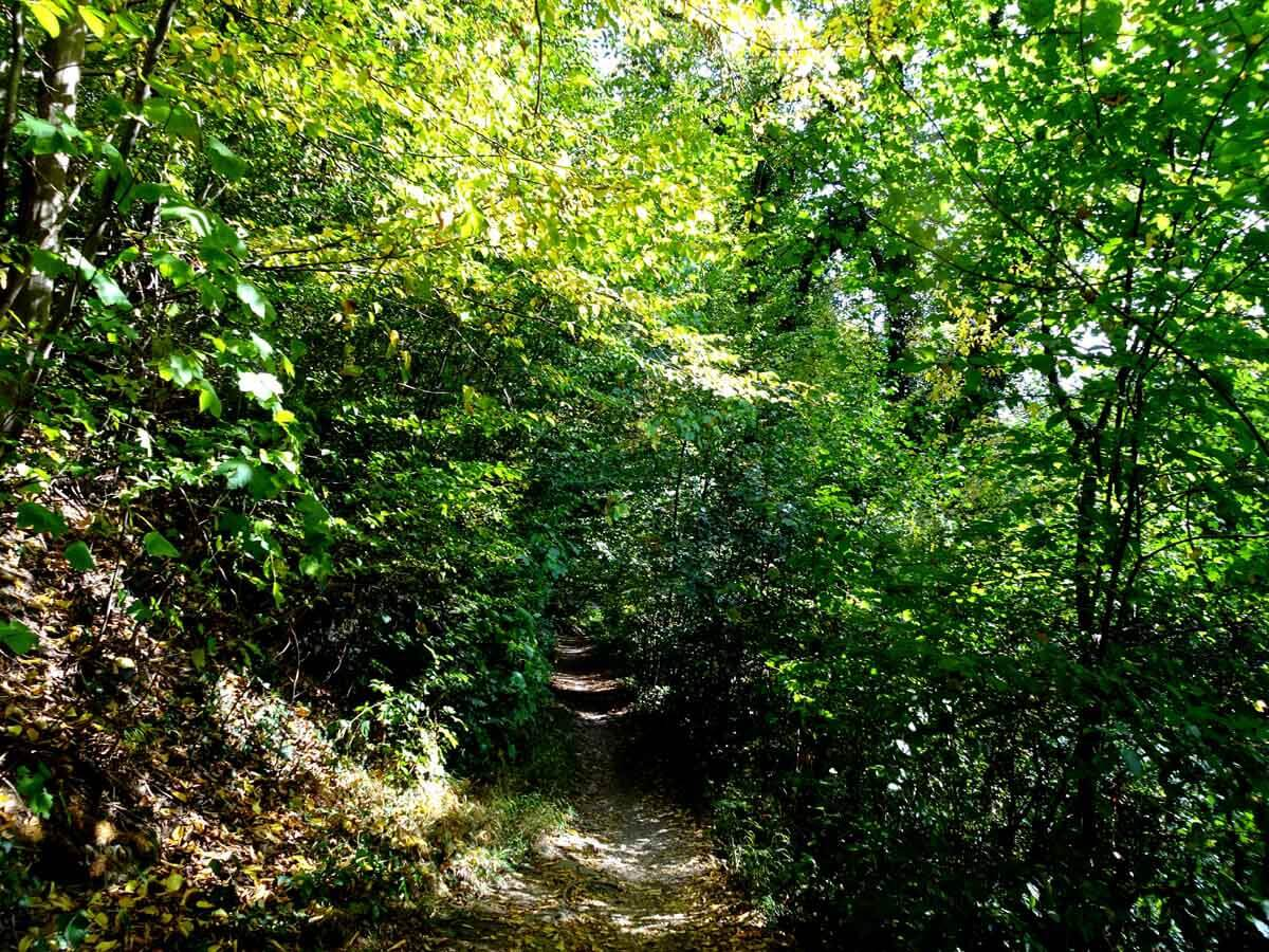 Der Höhlenweg bei Engelskirchen 1