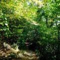 Der Höhlenweg bei Engelskirchen 20