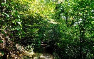 Der Höhlenweg bei Engelskirchen 3
