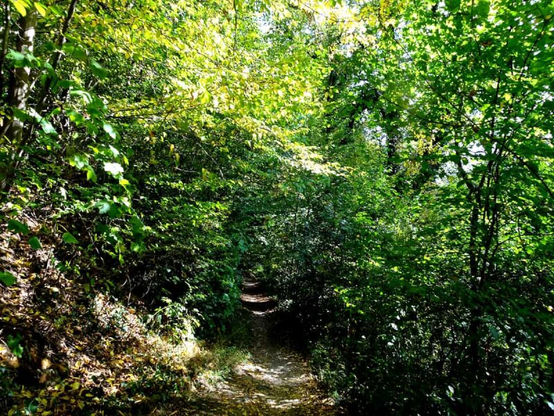 Der Höhlenweg bei Engelskirchen