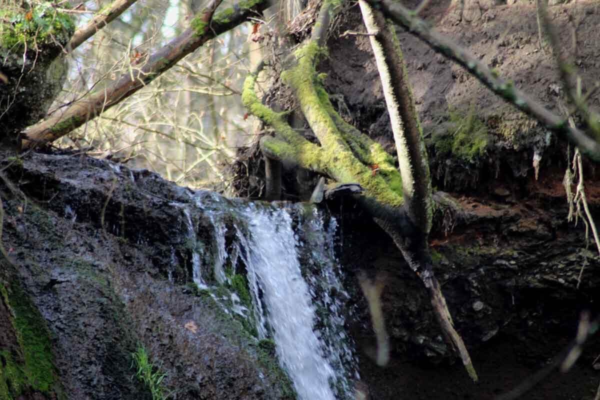 Rundwanderung: Von Burgbrohl zur Wolfsschlucht 1