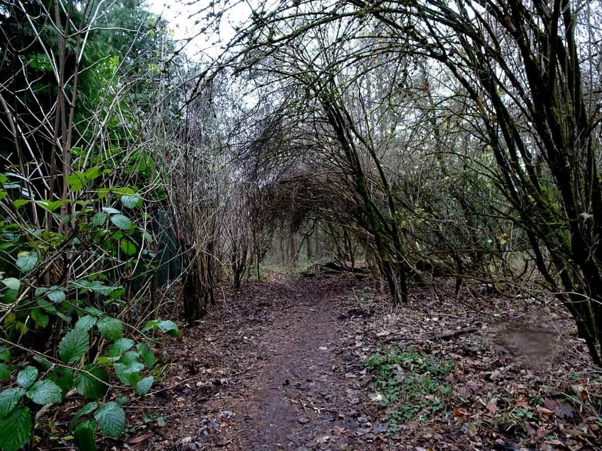 Wanderung auf kleinen Pfaden durch das Burgholz 1