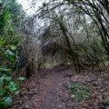 Wanderung auf kleinen Pfaden durch das Burgholz 21