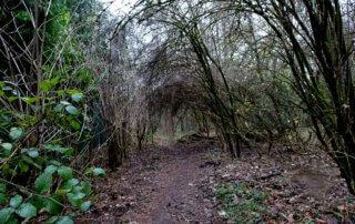 Wanderung auf kleinen Pfaden durch das Burgholz 29