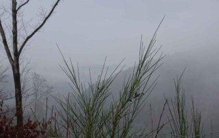 Der Wildwiesenweg 8