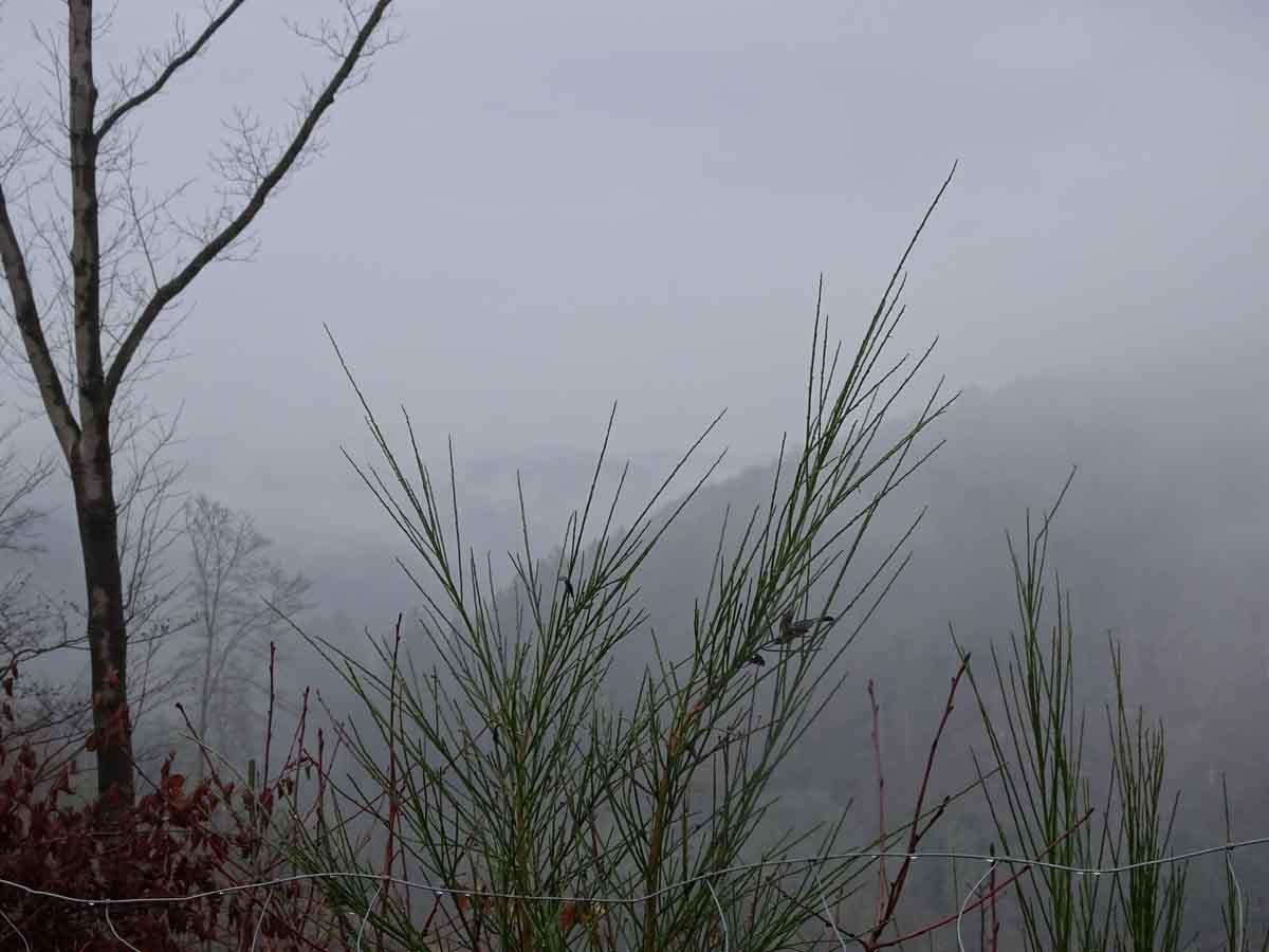 Der Wildwiesenweg 1
