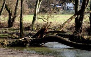 Rundwanderweg Neandertal 14