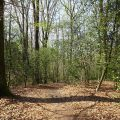 Rundwanderweg Herkenrath 19