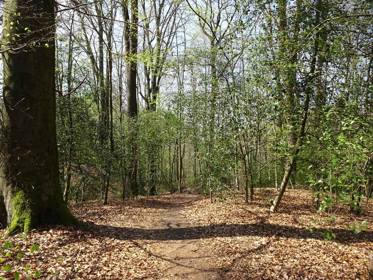 Rundwanderweg Herkenrath 1