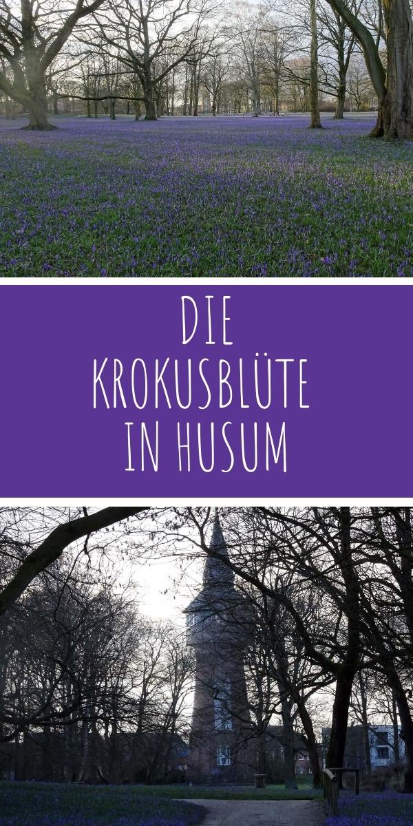 Zur Krokusblüte nach Husum