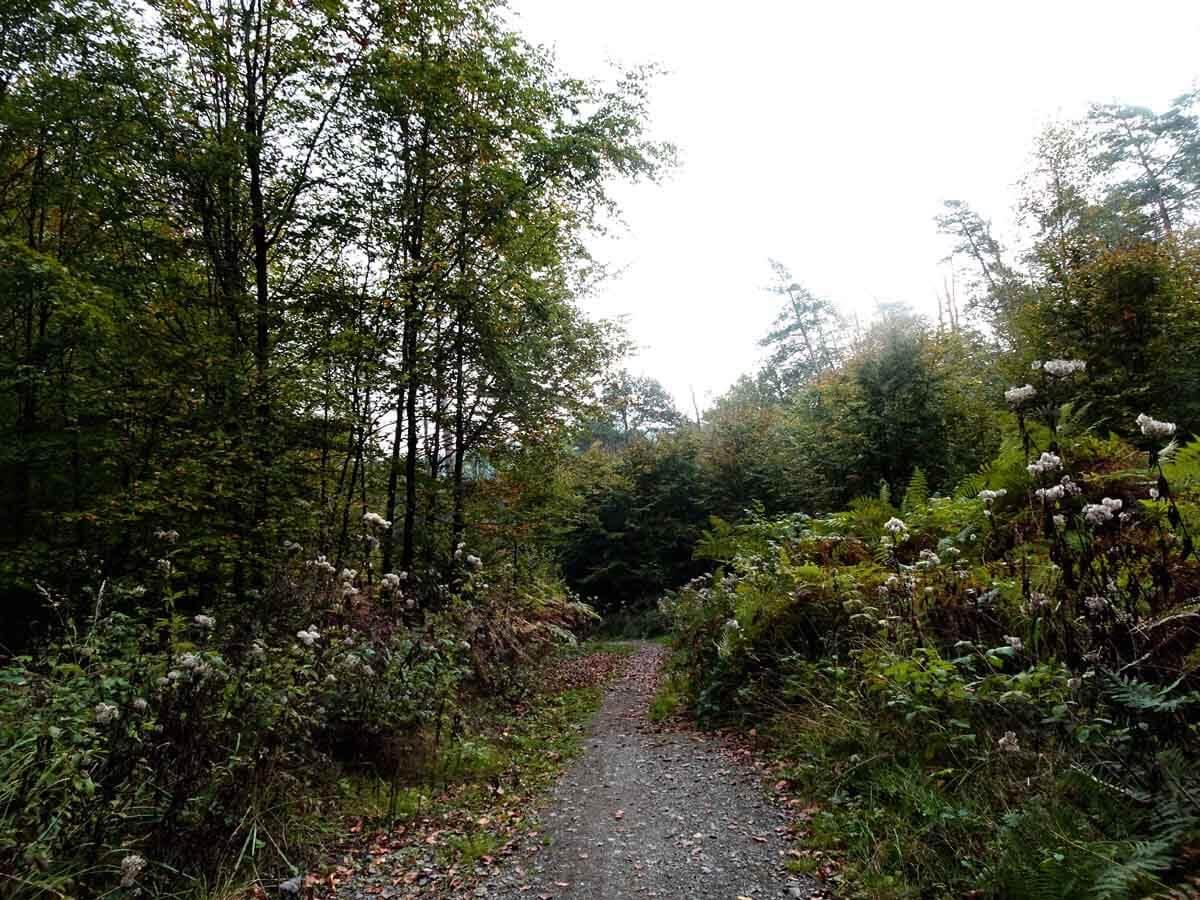 Waldweg auf dem D 2