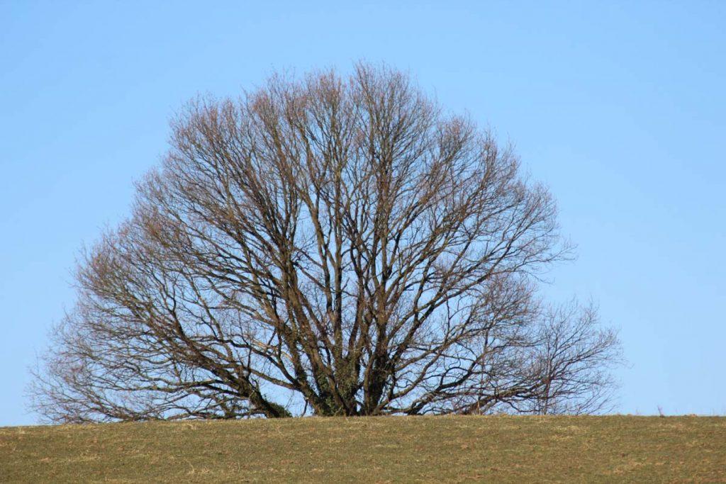 Wandern Wahner Heide Baum groß