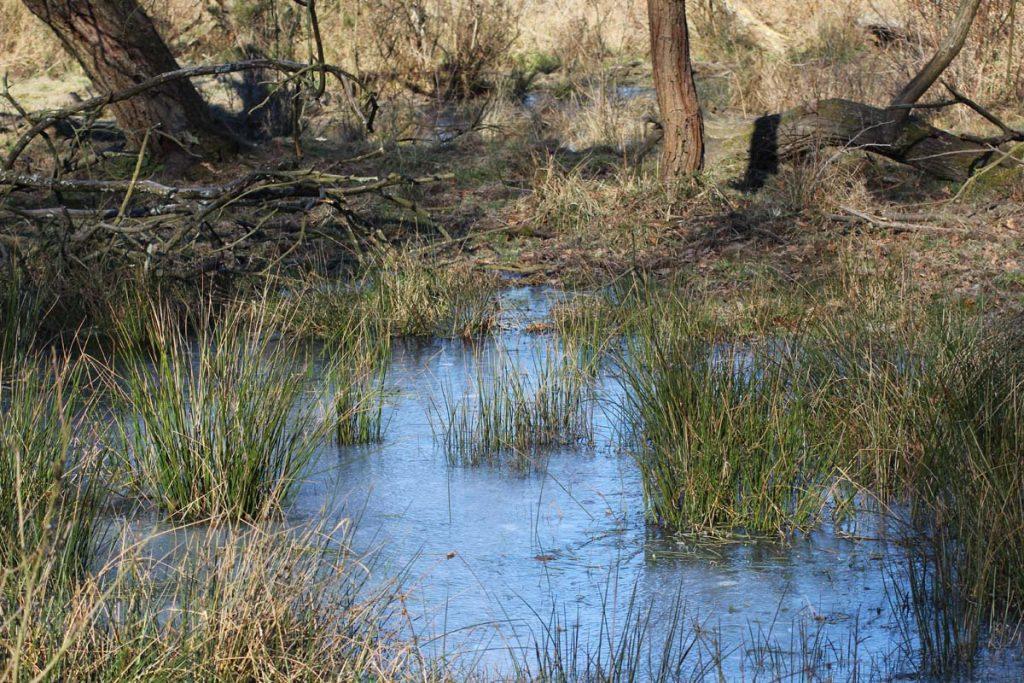 Wandern Wahner Heide Wasser auf Wiese