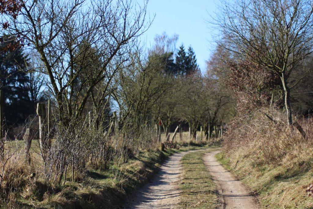 Wandern Wahner Heide Wiesenweg