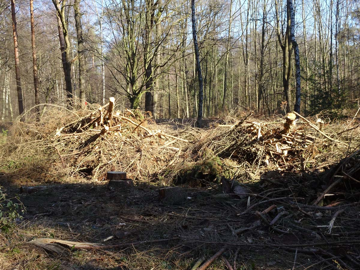 Wahner Heide und Aggerauen Abholzung