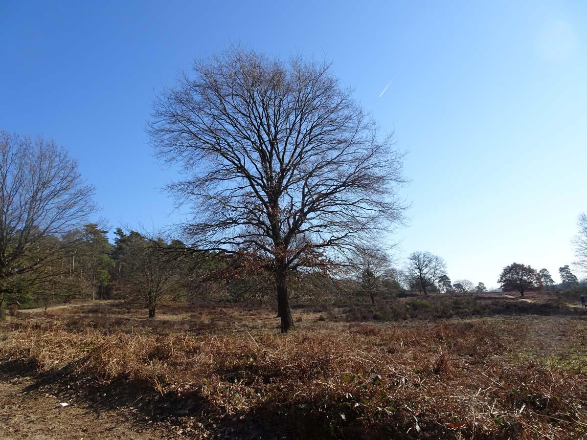 Wahner Heide und Aggerauen Baum