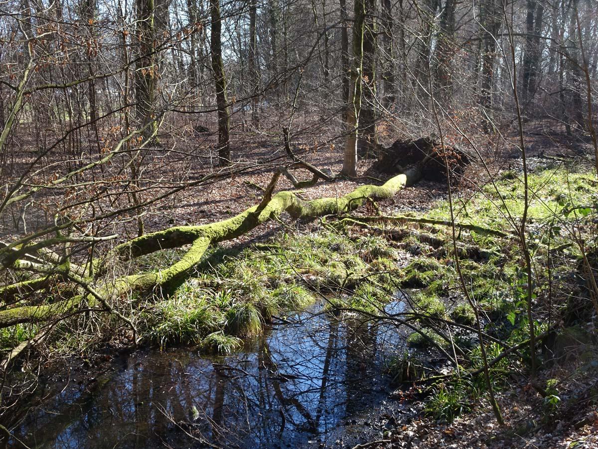 Wahner Heide und Aggerauen Baumstamm