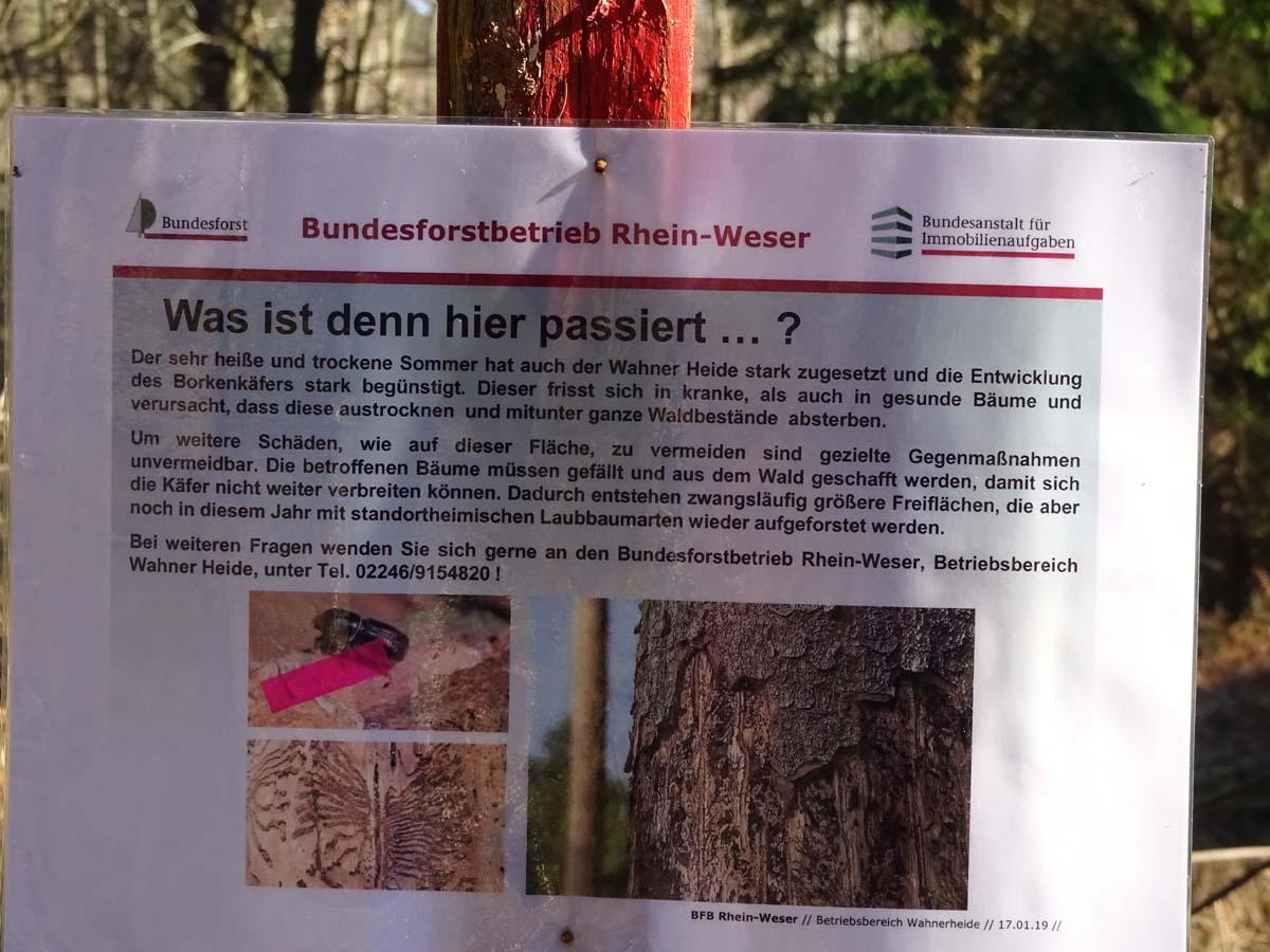 Wahner Heide und Aggerauen Borkenkäfer jpg