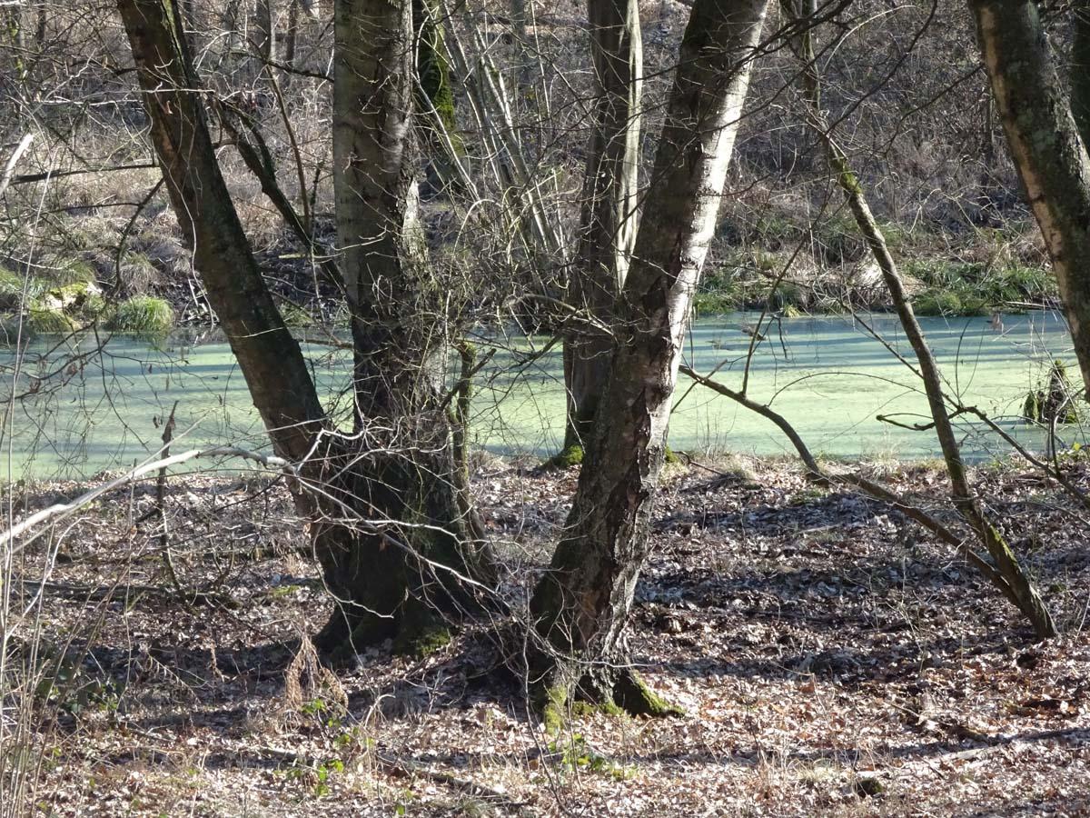 Wanderweg Wahner Heide: Durch die Heide in die Aggerauen 1