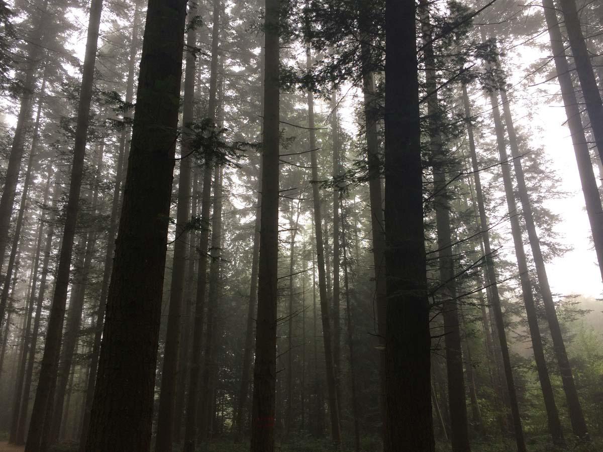 Warum ich den Harzer Hexenstieg nicht weiterempfehlen würde 1