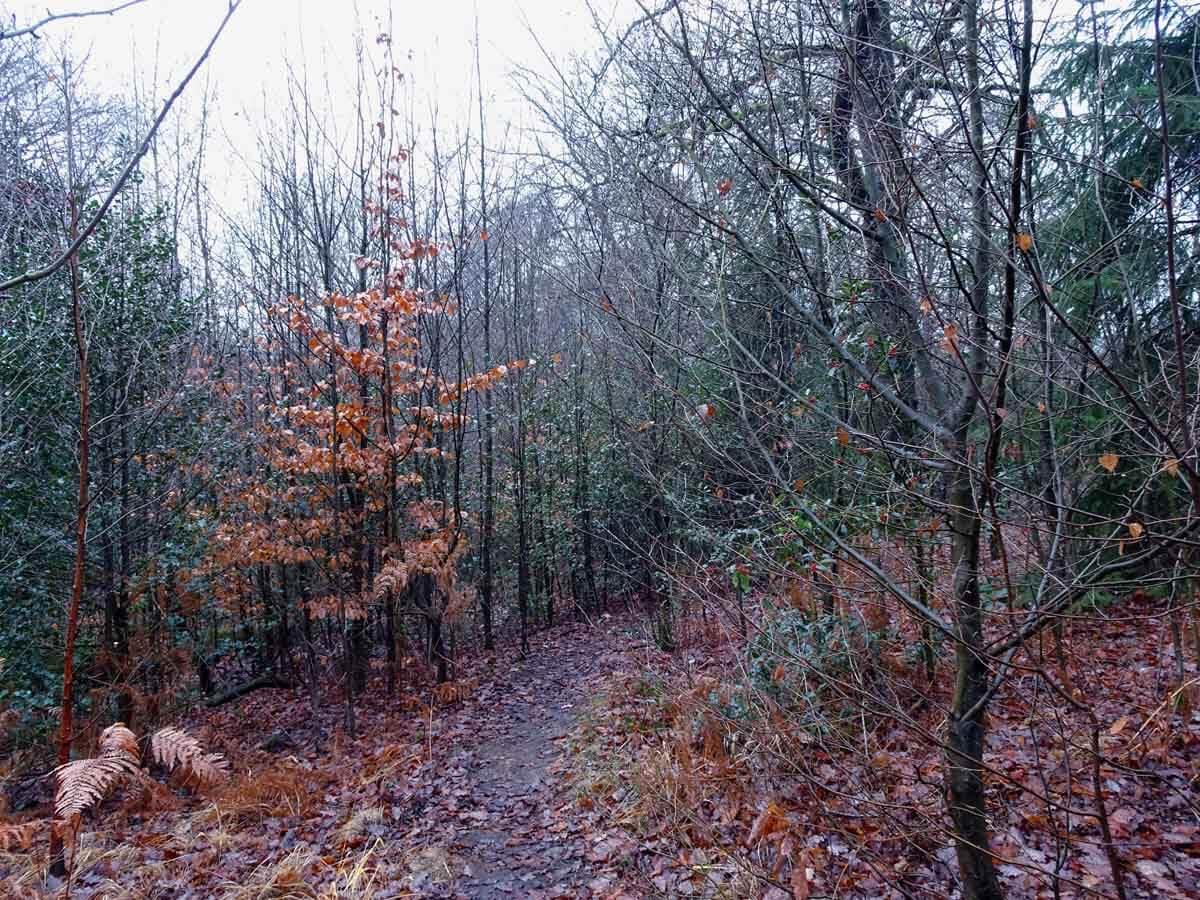 Wanderung auf kleinen Pfaden durch den Scharpenacken 6