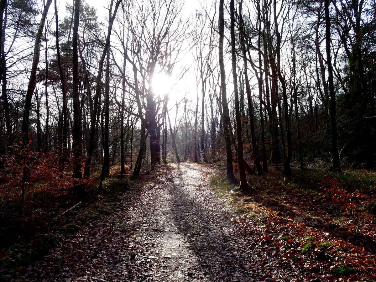 Rundwanderweg Eschbachtal 4
