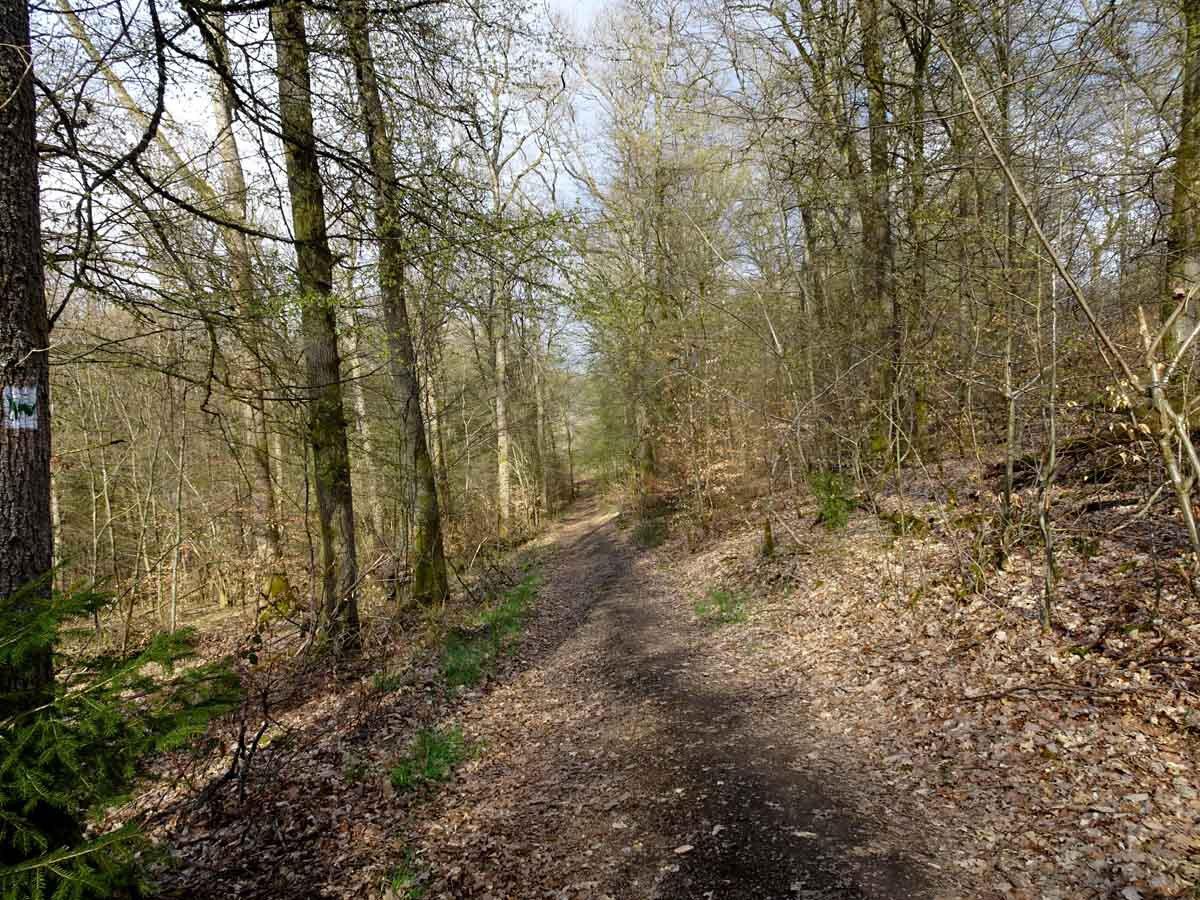 Rundwanderweg Limbach Klamm Waldweg