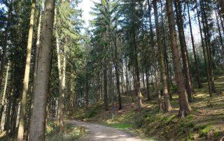Liederweg Lindlar 16