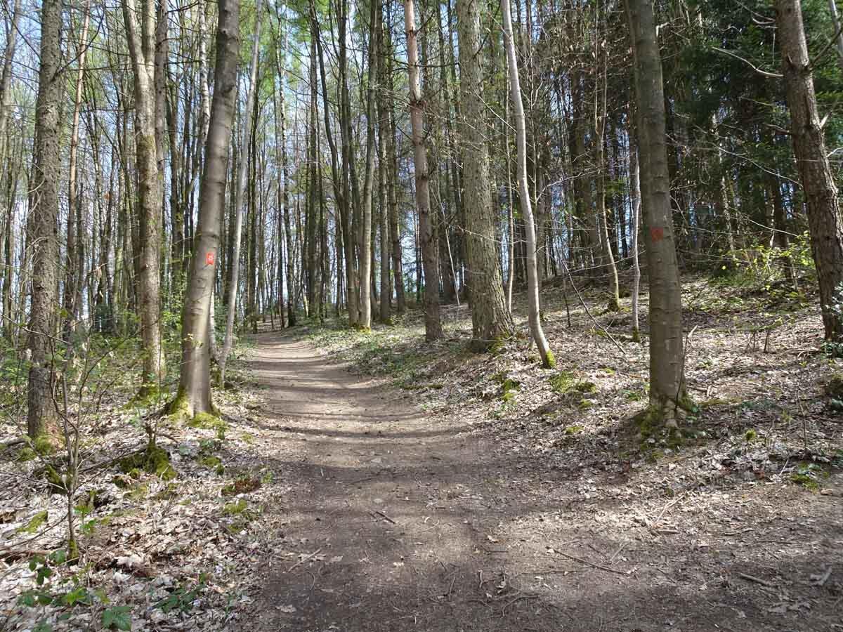 Waldweg auf dem Bergbaupfad