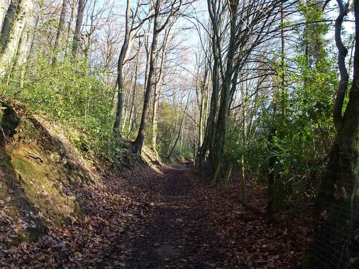 Wanderung durch das Gelpe- und Saalbachtal 3