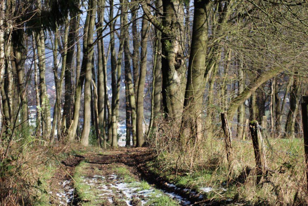 Wanderweg Süd Waldweg 2