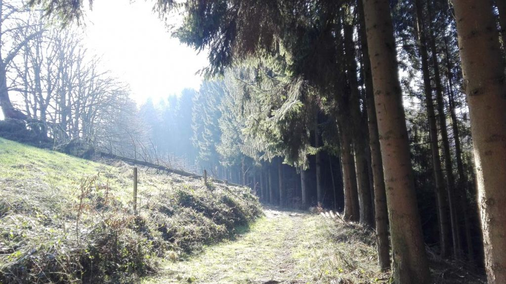 Wanderweg Süd Wiesenweg