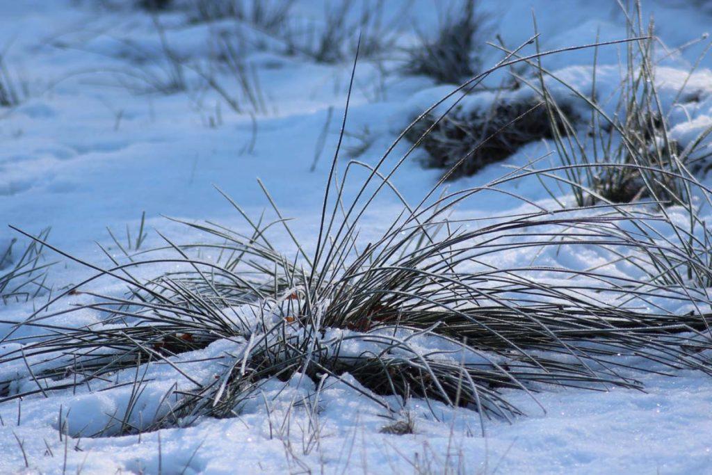 Wanderweg Süd winterlich
