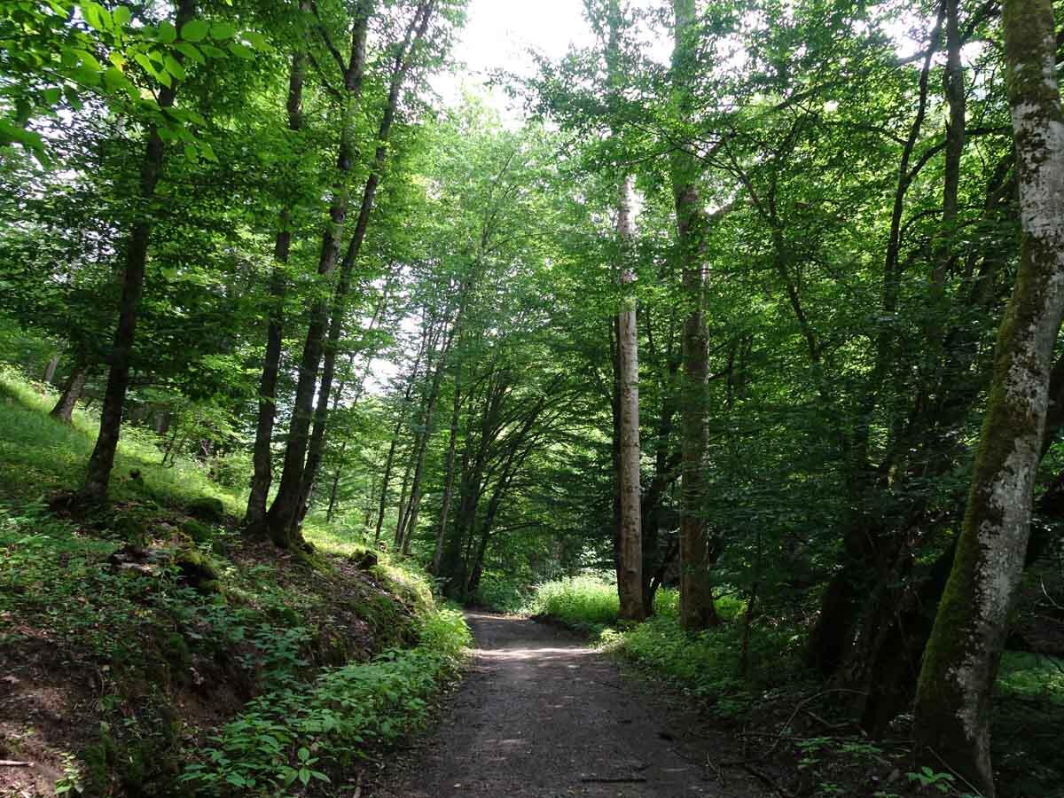 Wanderweg Traumschleife Layensteig